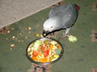 African Grey Parrot Birds for sale in Northview Ave, Anderson, SC 29625, USA. price: NA