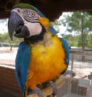 African Grey Parrot Birds for sale in Tempe, AZ, USA. price: NA