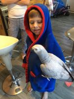 African Grey Parrot Birds for sale in Nevada City, CA 95959, USA. price: NA