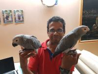 African Grey Parrot Birds for sale in TX-121, McKinney, TX, USA. price: NA