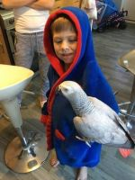 African Grey Parrot Birds for sale in Texas City, TX, USA. price: NA
