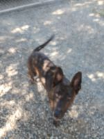 Akbash Dog Puppies for sale in Oroville, CA, USA. price: NA