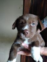 Alaskan Husky Puppies for sale in Hortense, GA 31543, USA. price: NA