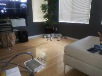 Alaskan Husky Puppies for sale in 5837 Magic Oak St, North Las Vegas, NV 89031, USA. price: NA