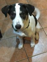Alaskan Husky Puppies for sale in 1231 Cameron Ave, Plainfield, NJ 07060, USA. price: NA