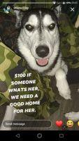 Alaskan Husky Puppies for sale in Henryetta, OK 74437, USA. price: NA
