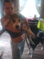 Alaskan Husky Puppies for sale in Elizabeth, CO 80107, USA. price: NA