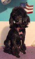 Alaskan Malamute Puppies for sale in 132 N 87th Pl, Mesa, AZ 85207, USA. price: NA