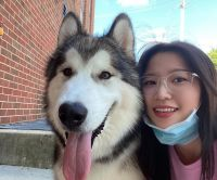 Alaskan Malamute Puppies for sale in 750 N 8th St, Milwaukee, WI 53233, USA. price: NA