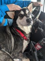 Alaskan Malamute Puppies for sale in Tryon, OK 74875, USA. price: NA
