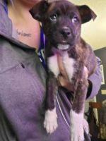 Alaskan Malamute Puppies for sale in Frederic, WI 54837, USA. price: NA