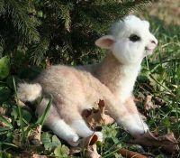 Alpaca Animals for sale in Atlanta, GA 30342, USA. price: NA