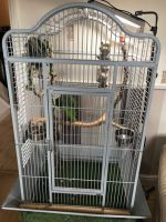 Amazon Birds for sale in Greensboro, NC, USA. price: NA