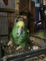 Amazon Birds Photos
