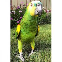 Amazon Birds for sale in Florida City, FL, USA. price: NA