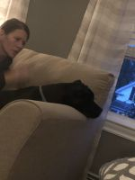 American Bulldog Puppies for sale in 14 Lovell St, Middleborough, MA 02346, USA. price: NA