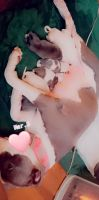 American Pit Bull Terrier Puppies for sale in Anderson, SC, USA. price: NA