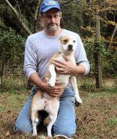 American Staffordshire Terrier Puppies for sale in Houston, TX, USA. price: NA