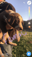 Austrailian Blue Heeler Puppies for sale in Ezel, KY 41425, USA. price: NA