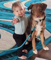 Australian Shepherd Puppies for sale in Southgate, MI, USA. price: NA