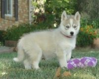 Bagel Hound  Puppies for sale in Burbank, CA, USA. price: NA