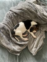 Bagel Hound  Puppies for sale in Riverside, CA, USA. price: NA