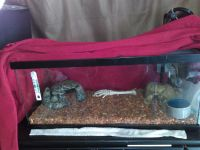 Ball Python Reptiles for sale in Glendale, AZ, USA. price: NA