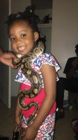 Ball Python Reptiles for sale in Phoenix, AZ, USA. price: NA