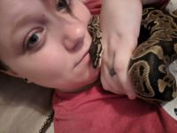Ball Python Reptiles for sale in Clarksville, TN, USA. price: NA