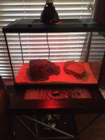 Ball Python Reptiles for sale in Enterprise, AL 36330, USA. price: NA