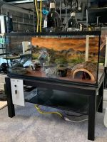 Ball Python Reptiles for sale in Apollo Beach, FL, USA. price: NA
