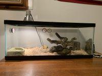 Ball Python Reptiles for sale in Ione, CA, USA. price: NA