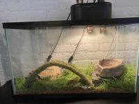 Ball Python Reptiles for sale in Norfolk, VA, USA. price: NA