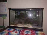 Ball Python Reptiles for sale in Brighton, MI 48116, USA. price: NA