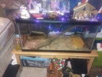 Ball Python Reptiles for sale in 138 Railroad St, Punxsutawney, PA 15767, USA. price: NA