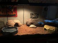 Ball Python Reptiles for sale in Jonesborough, TN 37659, USA. price: NA