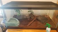 Ball Python Reptiles for sale in Lannon, WI, USA. price: NA