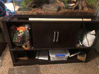 Ball Python Reptiles for sale in Pocatello, ID, USA. price: NA