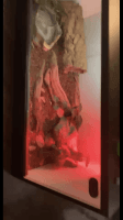 Ball Python Reptiles for sale in San Marcos, CA, USA. price: NA