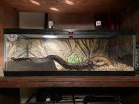 Ball Python Reptiles for sale in Bell Buckle, TN 37020, USA. price: NA