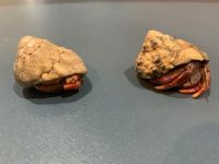 Banded Krait Reptiles Photos