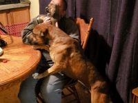 Bandog Puppies for sale in Brush Creek, TN 38547, USA. price: NA