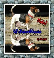 Basset Hound Puppies for sale in Wilkesboro, NC, USA. price: NA