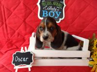 Basset Hound Puppies for sale in Boise, ID, USA. price: NA
