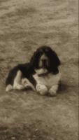 Basset Hound Puppies for sale in Buckley, MI 49620, USA. price: NA