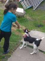 Beagle Puppies for sale in East Stroudsburg, PA 18301, USA. price: NA