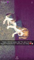 Beagle Puppies for sale in Wichita, KS, USA. price: NA