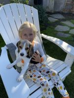 Beagle Puppies for sale in San Clemente, CA, USA. price: NA