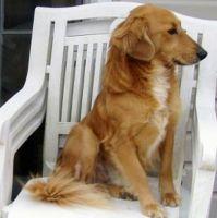 beago dog