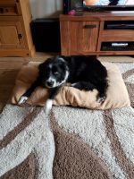 Bearded Collie Puppies for sale in England, AR 72046, USA. price: NA